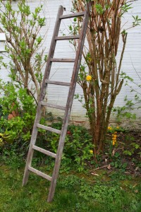 ancienne échelle en bois Rouge Garden