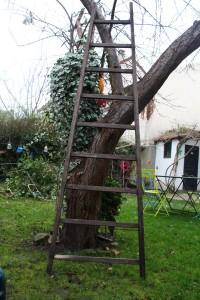 ancienne echelle bois jardin